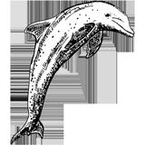 Dessin d'un dauphin