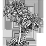 Dessin de palmiers