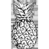 Dessin d'un ananas