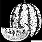 Dessin d'une pastèque