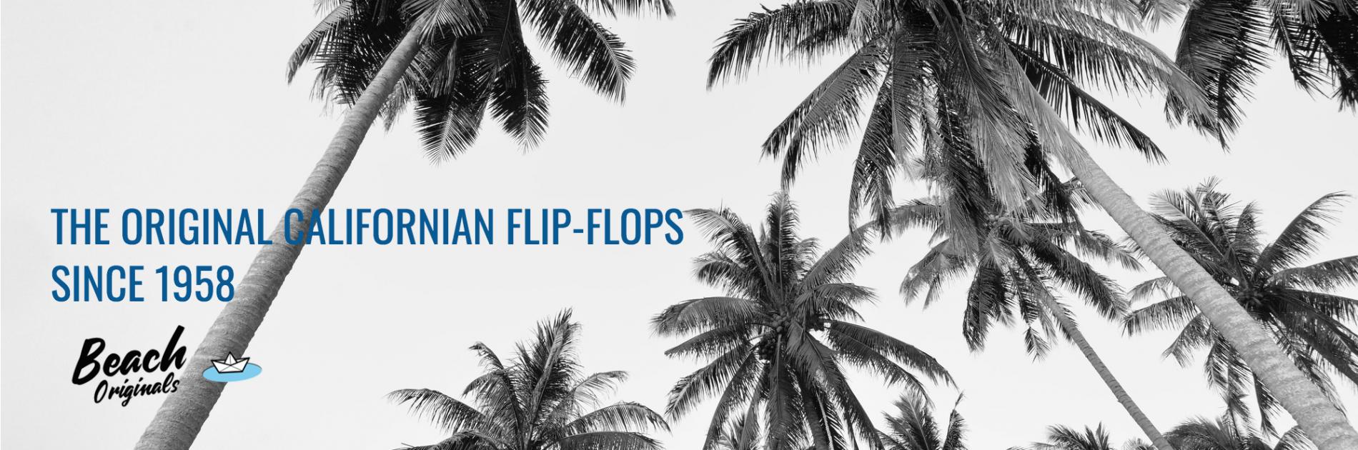 page d'accueil bureau Beach Originals sur fond de palmiers et texte couleur bleu